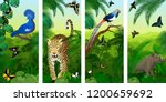 Set Of Vector Jungle Rainfores...