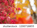 multi colored fall leaves | Shutterstock . vector #1200718855