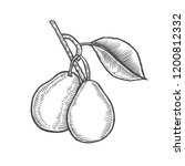 hand drawn pear branch. vector... | Shutterstock .eps vector #1200812332