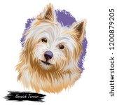 norwich terrier pet with long...   Shutterstock . vector #1200879205