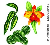 exotic flowers and leaves in... | Shutterstock . vector #1200920458