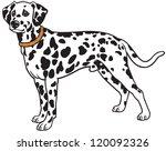Dog Dalmatian Breed Vector...
