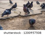 pigeons flew to the place of... | Shutterstock . vector #1200957508