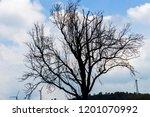 blue sky outdoor trees... | Shutterstock . vector #1201070992