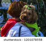 the shaggy small doggie looks... | Shutterstock . vector #1201078558