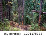 deep forest thicket background. ... | Shutterstock . vector #1201175338