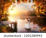 White Graceful Swan On Autumn...