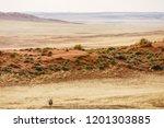 lonely oryx  oryx gazella  ... | Shutterstock . vector #1201303885