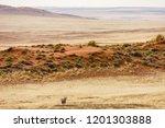 lonely oryx  oryx gazella  ... | Shutterstock . vector #1201303888