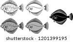 flounder   vector illustration  | Shutterstock .eps vector #1201399195