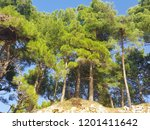 pine trees forest on the blue... | Shutterstock . vector #1201411642