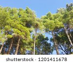 pine trees forest on the blue... | Shutterstock . vector #1201411678
