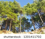 pine trees forest on the blue... | Shutterstock . vector #1201411702