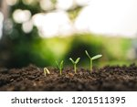 tree growth seedling in nature... | Shutterstock . vector #1201511395