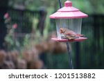 female northern cardinal... | Shutterstock . vector #1201513882