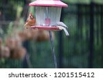 female northern cardinal... | Shutterstock . vector #1201515412