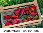 red sweet pepper in wooden box... | Shutterstock . vector #1201548082