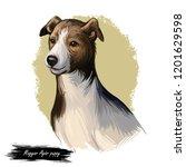 magyar agar puppy dog...   Shutterstock . vector #1201629598