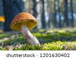 big mushroom grow in sun rays... | Shutterstock . vector #1201630402