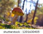 big mushroom grow in sun rays... | Shutterstock . vector #1201630405