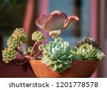 Different Succulent Plants In ...