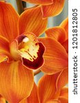 collection of orchid isolated... | Shutterstock . vector #1201812805
