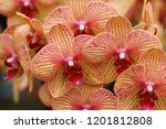 collection of orchid isolated... | Shutterstock . vector #1201812808