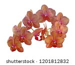 collection of orchid isolated... | Shutterstock . vector #1201812832