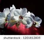 collection of orchid isolated... | Shutterstock . vector #1201812835