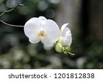 collection of orchid isolated... | Shutterstock . vector #1201812838