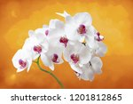 collection of orchid isolated... | Shutterstock . vector #1201812865