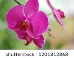collection of orchid isolated... | Shutterstock . vector #1201812868