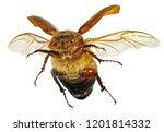 flying beetle  coleoptera ...   Shutterstock . vector #1201814332