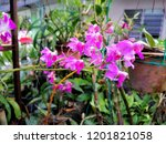 beautiful pink wild orchid in... | Shutterstock . vector #1201821058