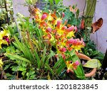 beautiful yellow orchid in the... | Shutterstock . vector #1201823845