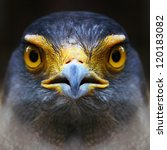 Serpent Eagle Close Up Face....