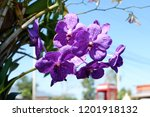 a purple orchid are blooming | Shutterstock . vector #1201918132