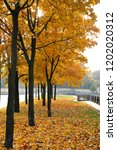 autumn view of the maple alley... | Shutterstock . vector #1202020312