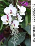 beautiful orchid bloom | Shutterstock . vector #1202052742