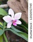 beautiful orchid bloom | Shutterstock . vector #1202052745