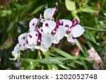 beautiful orchid bloom | Shutterstock . vector #1202052748
