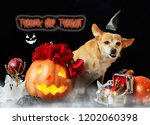 charming little dog with a... | Shutterstock . vector #1202060398