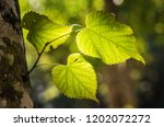 textures and light on... | Shutterstock . vector #1202072272