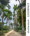 avenue of royal palm trees at... | Shutterstock . vector #1202089615