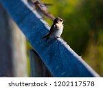 a dainty delightful  little... | Shutterstock . vector #1202117578