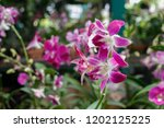 the purple orchids garden | Shutterstock . vector #1202125225