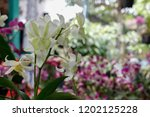 the purple and green orchids... | Shutterstock . vector #1202125228