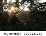 jungle evening sunset over... | Shutterstock . vector #1202131282