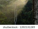 jungle evening sunset over... | Shutterstock . vector #1202131285