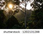 jungle evening sunset over... | Shutterstock . vector #1202131288